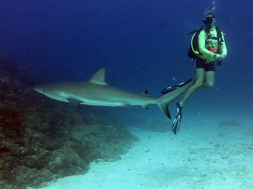 Shark Diving St. Maarten